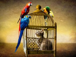 Cat in a parrot cage