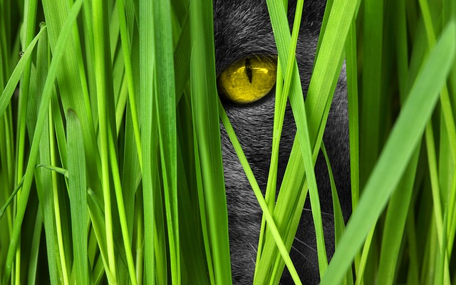 Cat peaking through blades of grass